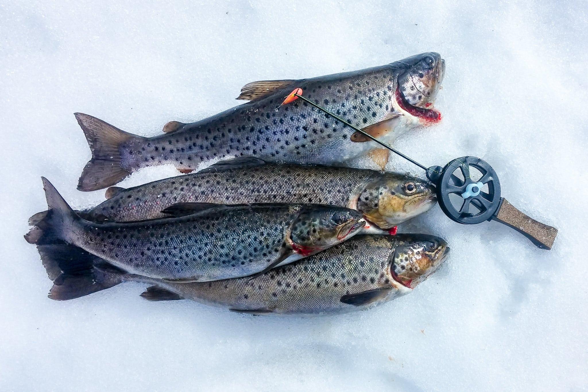 I Lofsdalen och Glöte i Härjedalen finns det gott om fiskemöjligheter både för den vane fiskaren och mer lättillgängliga fiskevatten för familjefiske.